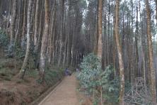Bukit Moko 3