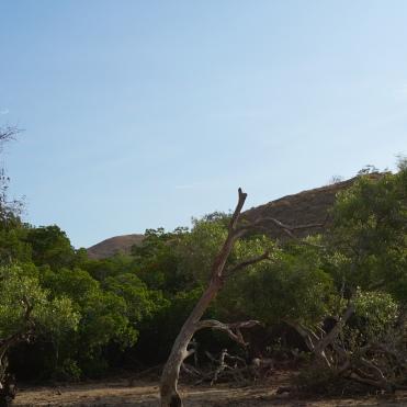 Pohon Langka