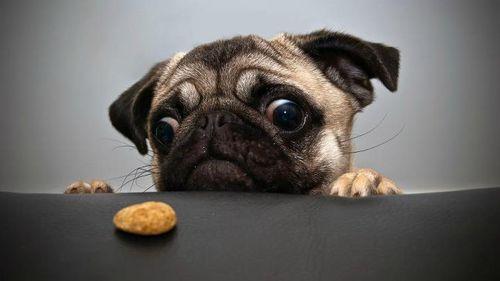 dog-temptation