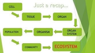hierarchy-of-cellular-organization-10-638