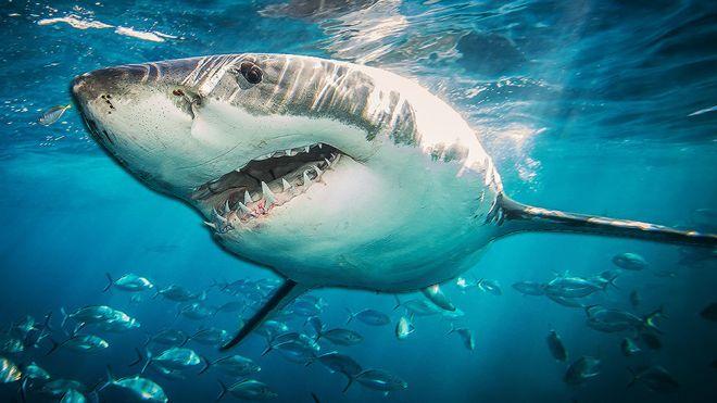 105702604_shark976