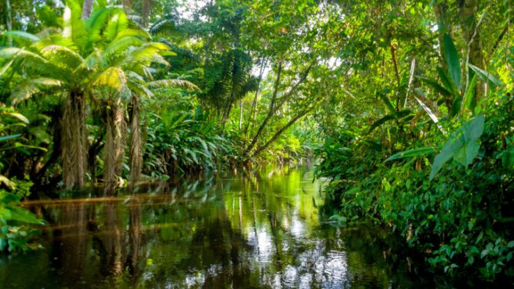 amazon-jungle-yasuni-ecuador-800x450